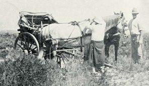 Ella Gordon Horse lover