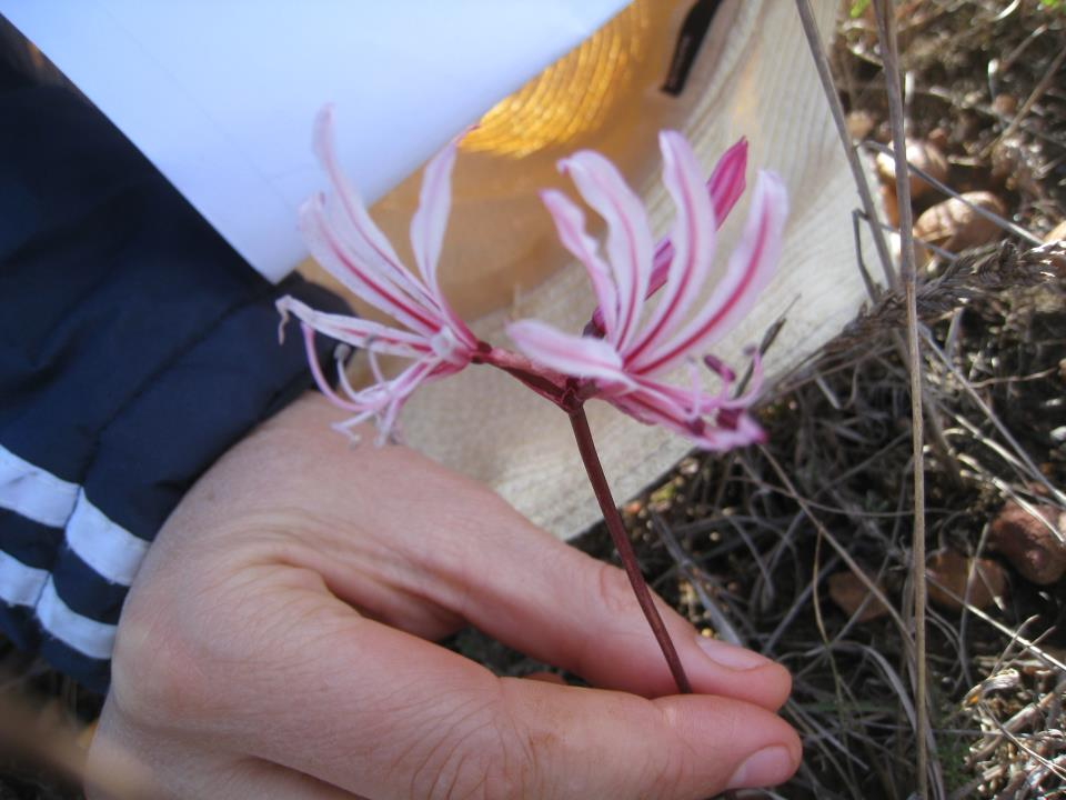 flora cameron