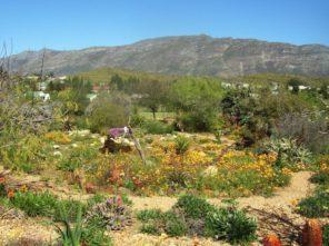 Barrydale gardens