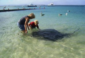 parrie the stingray