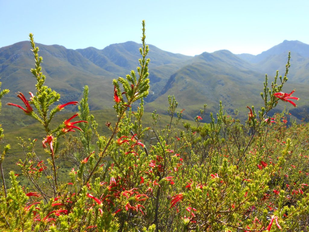 barrydale hiking bootsandfins
