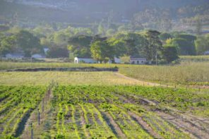 winelands mel elliot