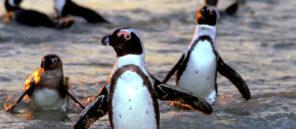 penguins-2